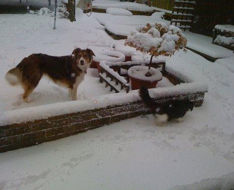 Cat and Dog - Lewsey Farm, Luton
