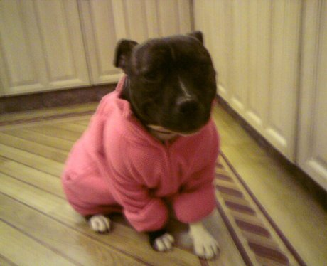 Dress Up Your Pet Day - Melody