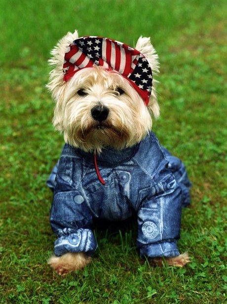 Best dressed dogs