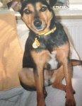 missing David Vane Southampton dog