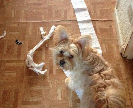 Heart Essex Dog Shaming