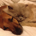 Image 1: cats and dogs sleeping next to each other
