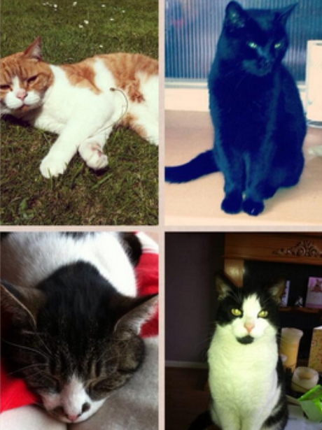 montage of four cats