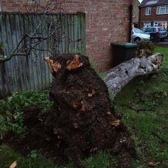 Tree after Hayling Island Tornado