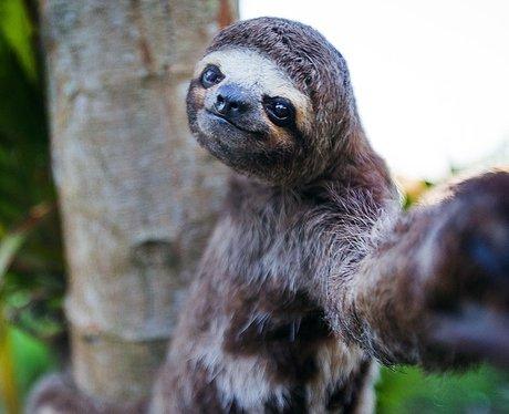 Sloth animal selfie