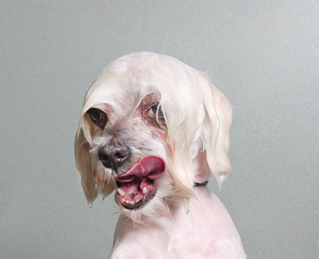 a wet white dog