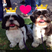 Image 3: Two dogs with crowns on