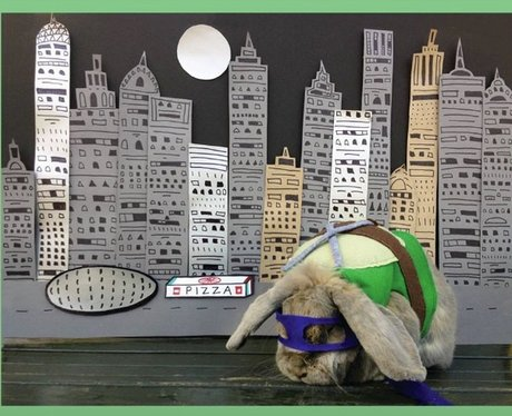 Benjamin The Bunny in a miniature costume against a night time city scene