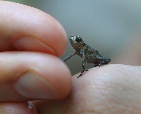 tiny frog on finger