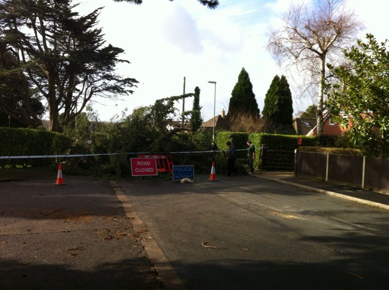 fallen tree in Locks Heath Park Road, Locks Heath