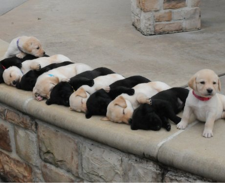 black and white puppies