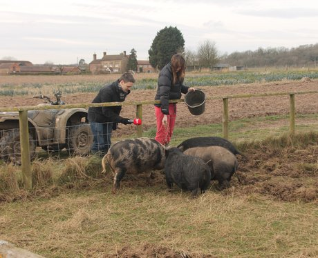 Over Farm Pig Racing