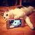 Image 10: A cat taking a selfie