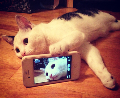 A cat taking a selfie