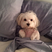 Image 5: A dog sitting up in bed