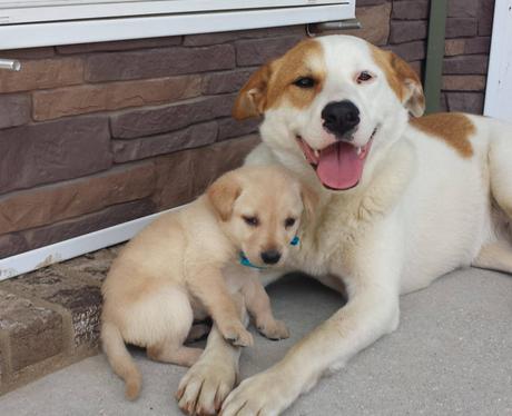 A puppy sitting with a big dog
