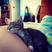 Image 7: A kitten fast asleep
