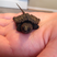 Image 3: A tiny turtle in a person's hand
