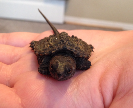 A tiny turtle in a person's hand