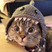 Image 5: A cat with a shark hat on