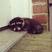 Image 6: An animal sleep on a doorstep