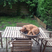Image 2: A dog asleep in a bowl