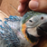 Image 9: A parrot being stroked