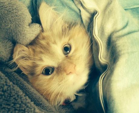 A cat snuggled in a bed
