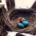 Image 2: A baby bird in a nest