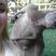 Image 7: A photo bombing kangaroo