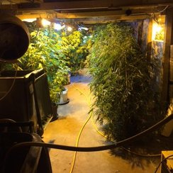 Soham Cannabis Factory