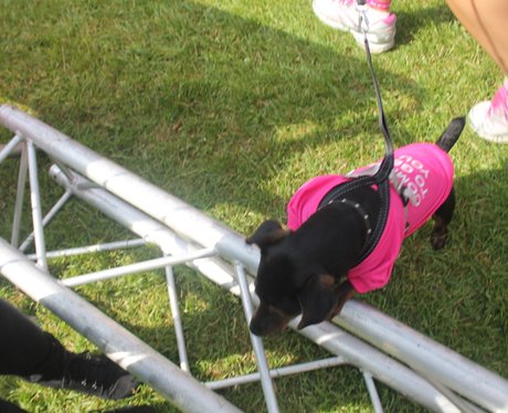 Race for Life Gloucester - The Dogs 2014