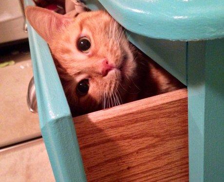 Kitten hides in a draw