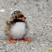 Image 10: A baby puffin
