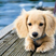 Image 7: puppy lays by the pool.
