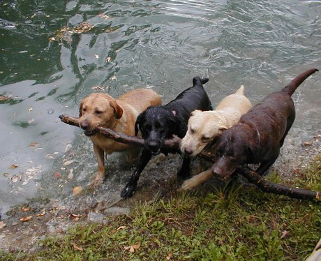 dogs with stick