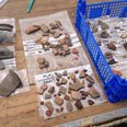 Rare finds in Ipplepen dig