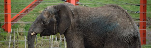 M'Changa elephant at Noah's Ark Zoo Farm