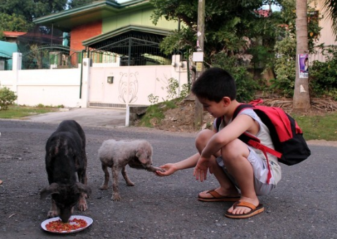 Child Feeds Stray Dogs - Happy Animals Club
