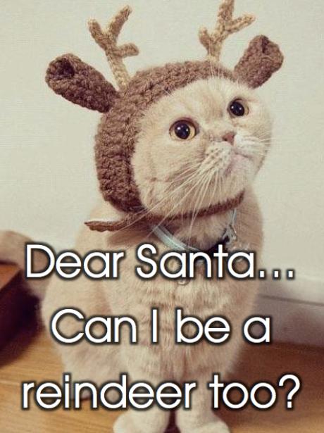 Christmas Pets - Cat Reindeer