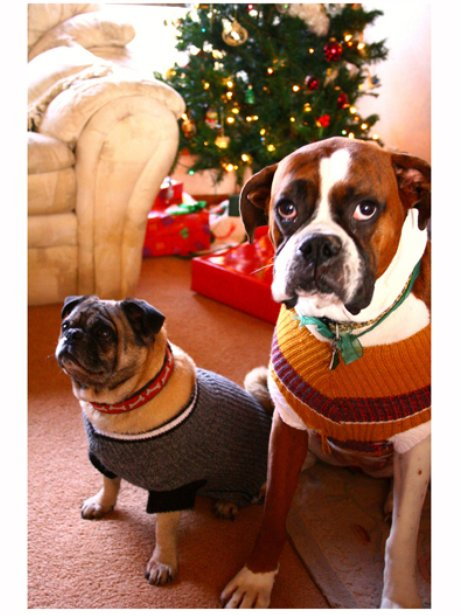 Heart - Pets In Christmas Costumes