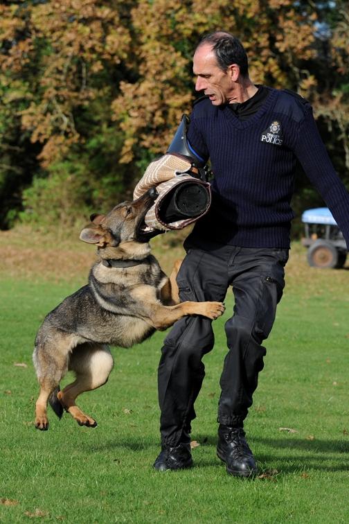 Xena Dorset police dog