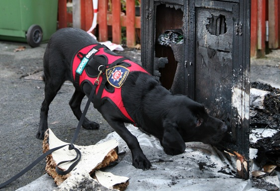 Hampshire fire dogs Saxon Inca