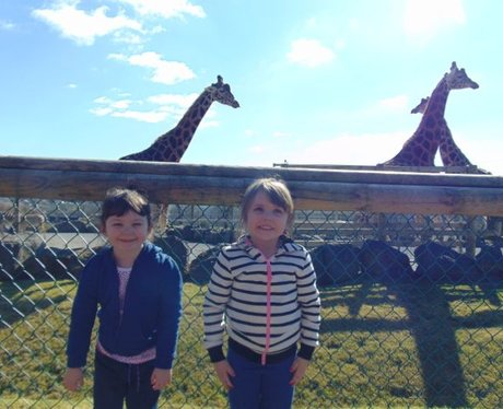 Comparing heights with the animals at Folly Farm