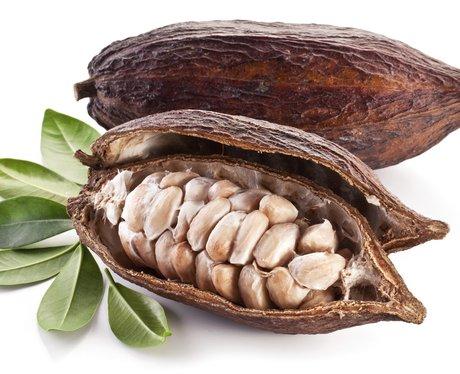 Cacao Bean Pod