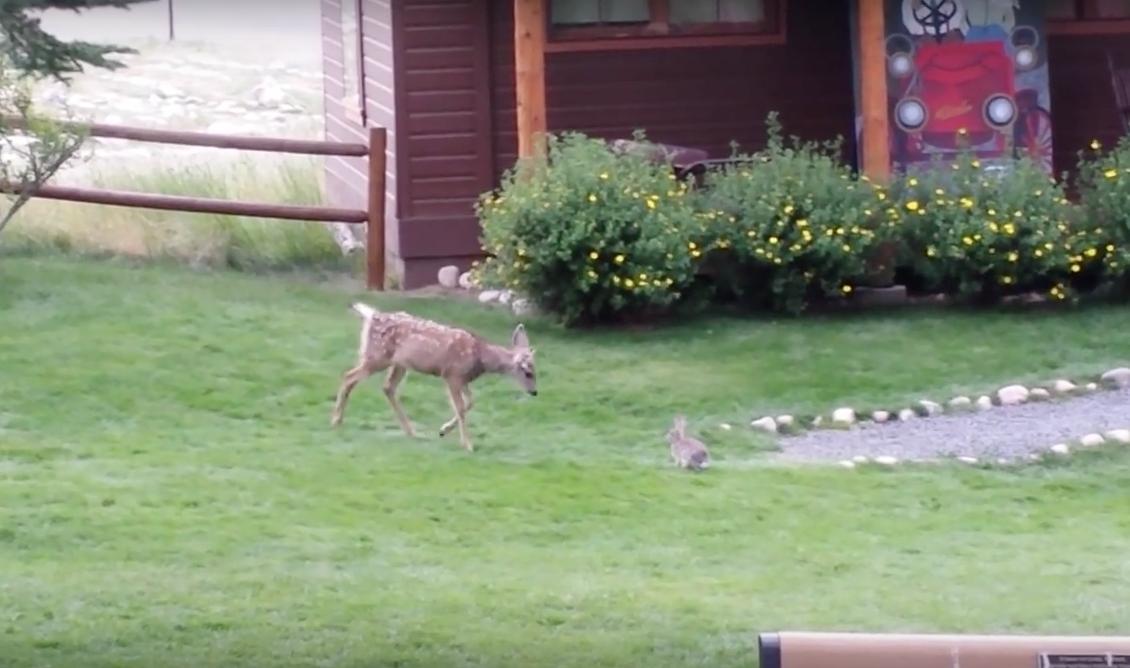 Real Life Bambi