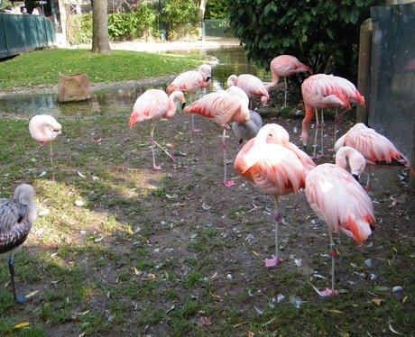 The Heart Angels visit Drusillas Park!