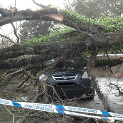 Car hit by tree in Devon during storm Imogen
