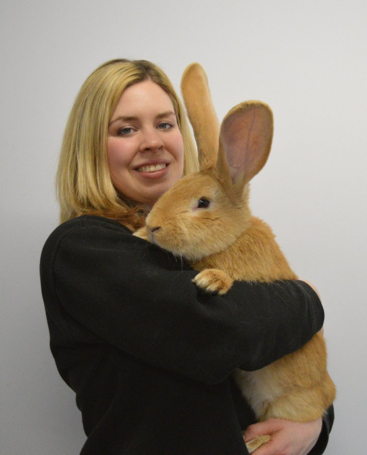 This massive rabbit needs a new home heart