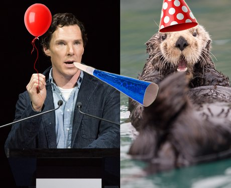 Benedict Cumberbatch and an otter party